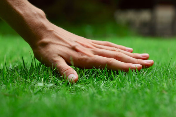 Few Other Lawn Care Tips